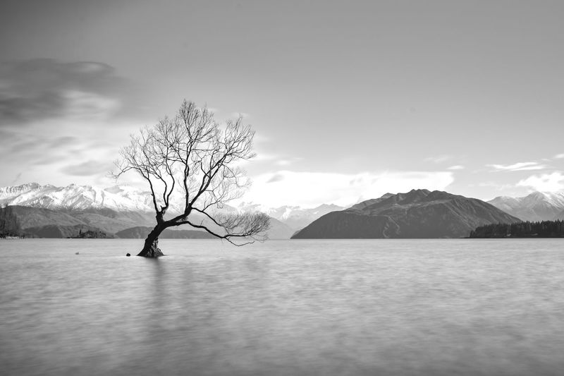 Lone Tree of Lake Wanaka in black and white Bare Tree Beauty In Nature Cloud - Sky Cold Temperature Day Environment Landscape Mountain Mountain Range Nature No People Non-urban Scene Outdoors Scenics - Nature Sky Snow Snowcapped Mountain Tranquil Scene Tranquility Tree Winter