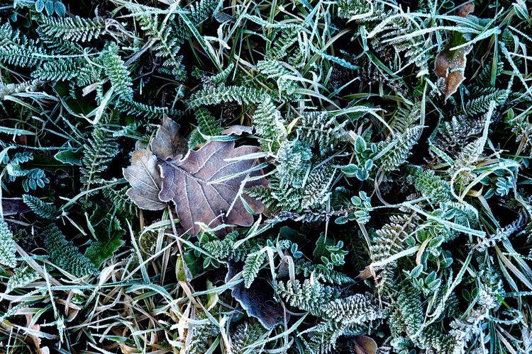 Full frame shot of frozen leaves in grass