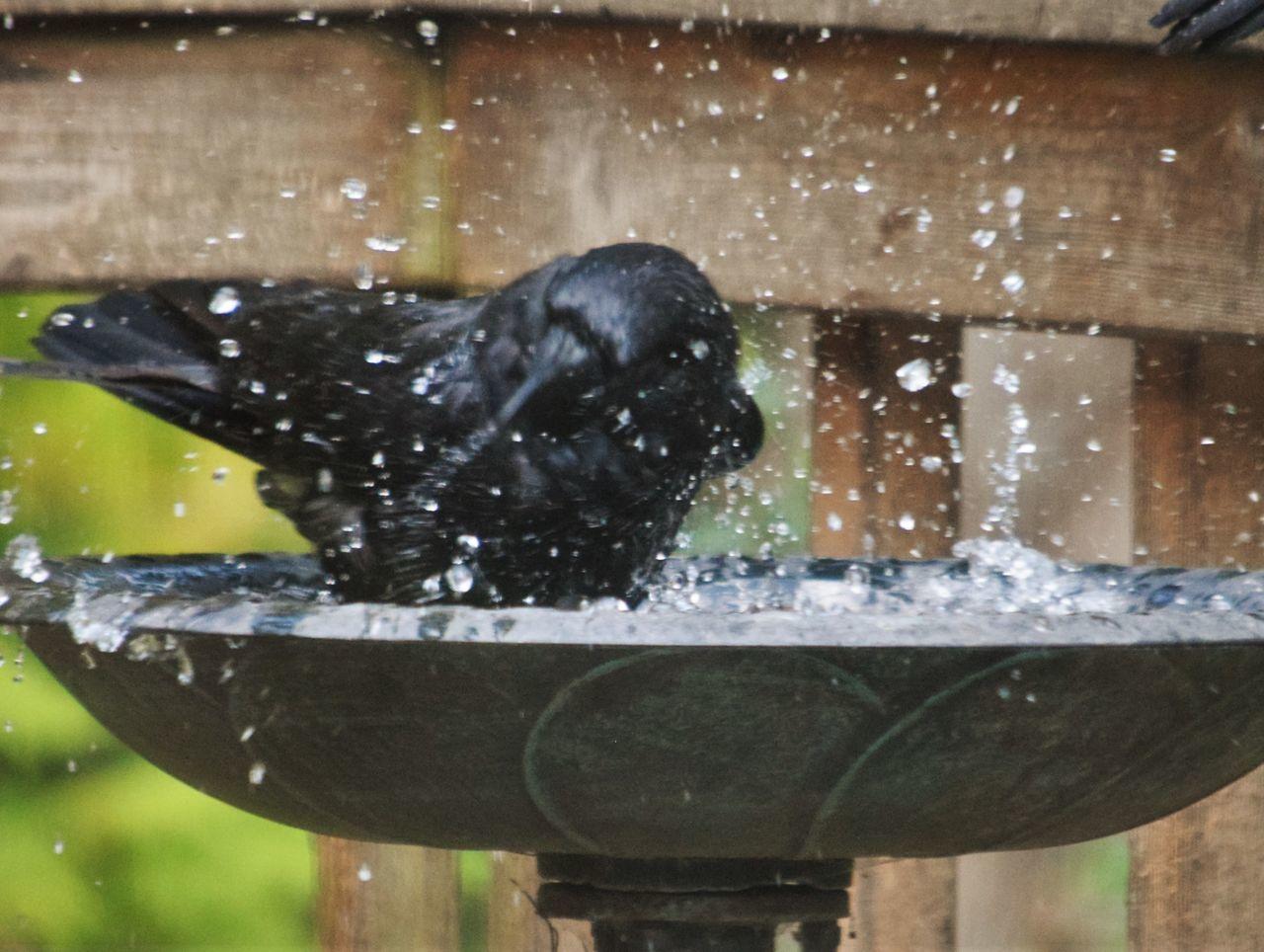 CLOSE-UP OF WET BIRD IN WATER