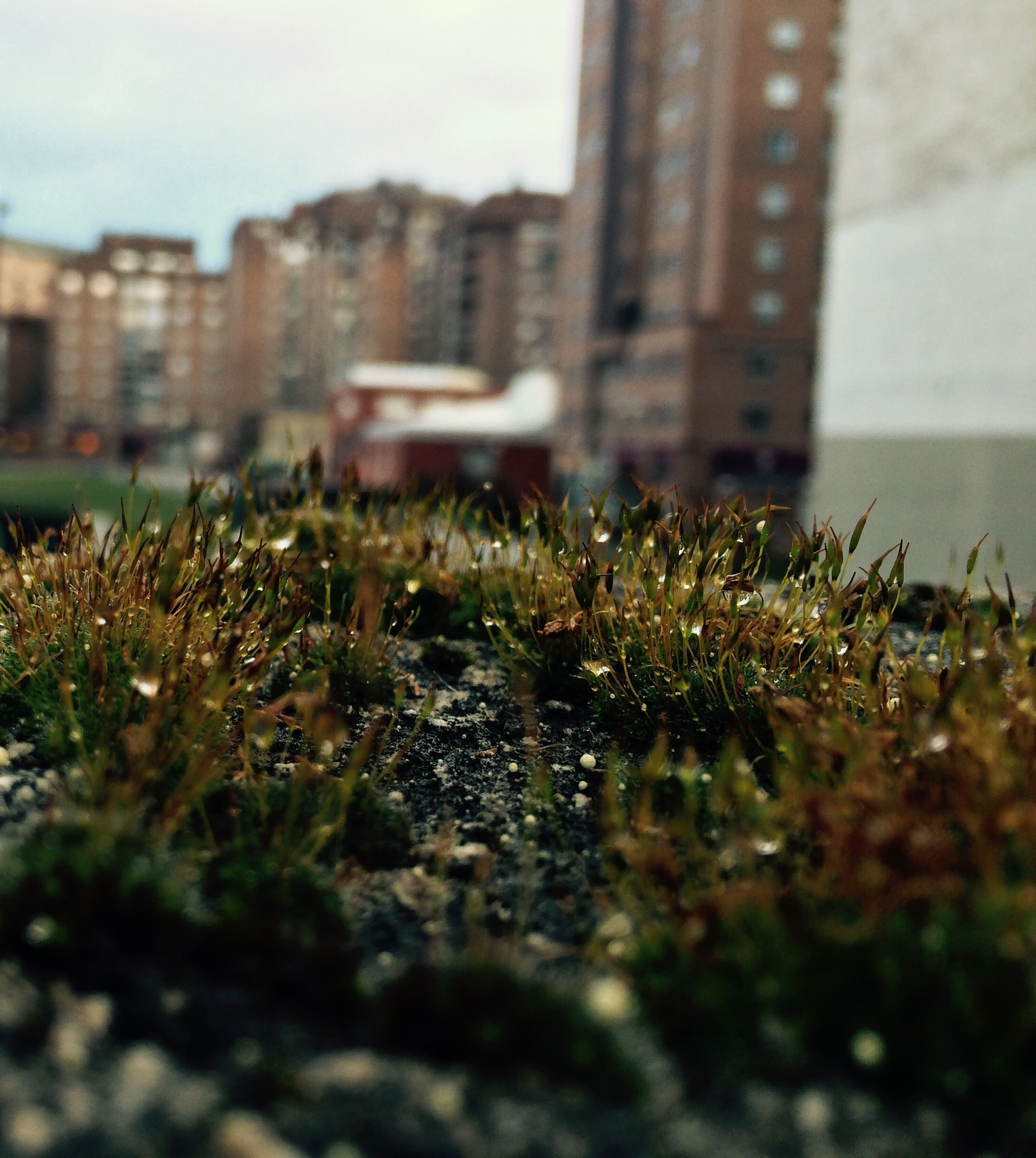 building exterior, architecture, built structure, selective focus, plant, growth, surface level, house, grass, field, nature, focus on foreground, residential structure, day, residential building, outdoors, no people, focus on background, growing, close-up