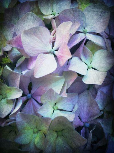 best flower Photo
