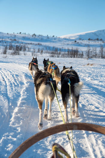 Dog sledding outside of Tromsø No People Sky Canine Day Sled Dog Group Of Animals Cold Temperature Animal Animal Themes Winter Snow Dog Sledding EyeEmNewHere