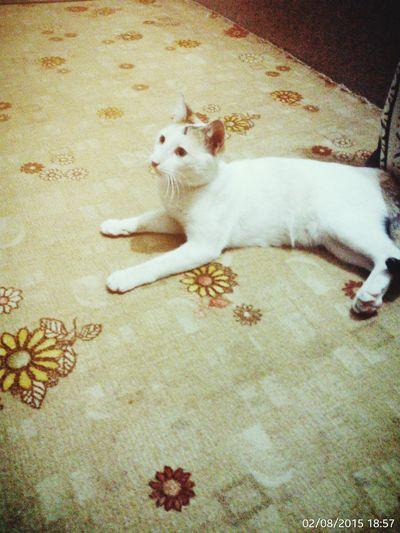 Catobsessed Pets Cat Ilovemycat