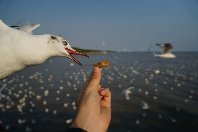 Cropped image of hand holding seagull against sky