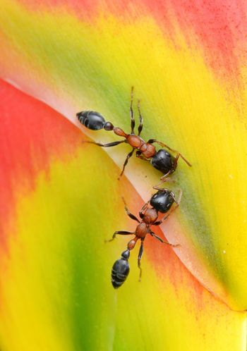 Ants Insect Animals In The Wild Animal Themes No People Nature Close-up Outdoors Togetherness Day Beauty In Nature EyeEmNewHere The Week On EyeEm Beauty In Nature Macro Photography Macro Ants Black Ants Bright Colors