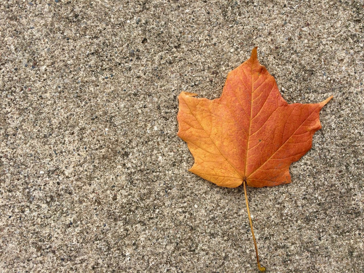 leaf, plant part, autumn, change, dry, orange color, close-up, nature, no people, textured, day, high angle view, vulnerability, fragility, falling, outdoors, maple leaf, rough, plant, leaf vein, leaves, natural condition, concrete, autumn collection