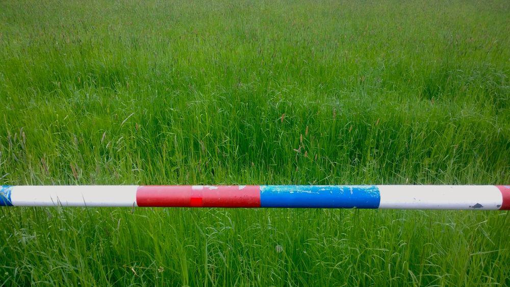 Schaumburg Grass