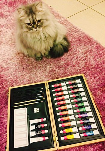 Art Box Acrylic Painting Cat Model Volunteering