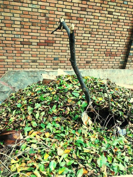 Bunch Of Leaves Bricks And A Stick Of Wood Leaves Dead Nature Nature Green
