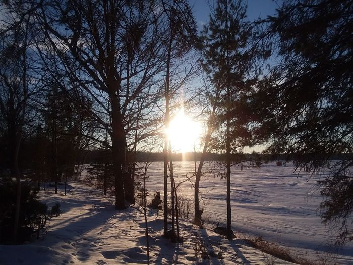 Happy Sunday Friends 🌷💚🌷 morning sunrise Roy lake mn Tree Sunlight Nature Beauty In Nature Outdoors Sun Tranquility Cold Temperature Snow Scenics Tranquil Scene Sky Winter
