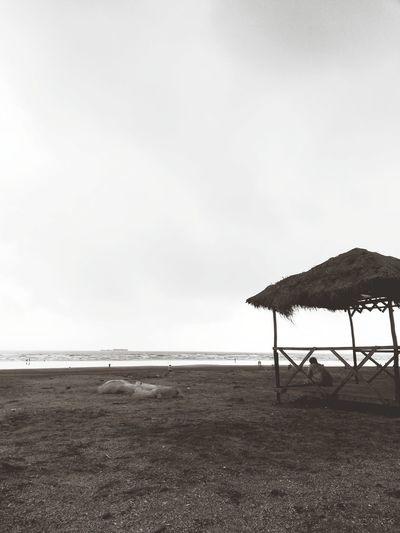 Indian beach Water Sea Beach Bird Sky Horizon Over Water Cloud - Sky Animal Themes