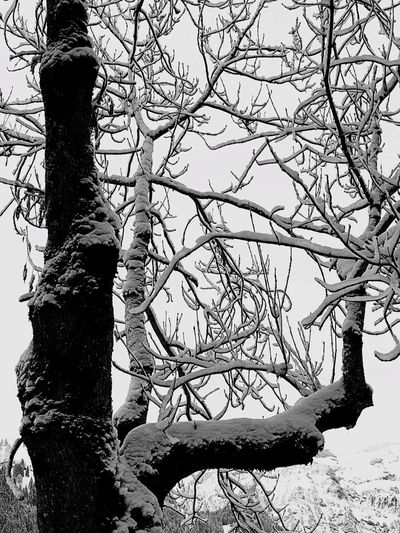 Black And White Friday Lenk Switzerland Tree Tree Trunk Branch Nature Bare Tree Outdoors Beauty In Nature Day Winter Growth Tranquility No People Forest Low Angle View Scenics Sky Close-up