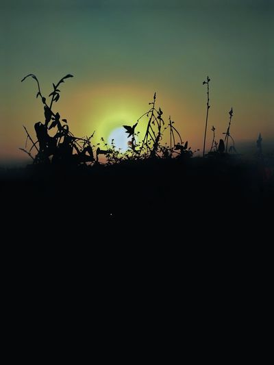 Bird Sunset Tree Silhouette Sky Animal Themes Landscape Plant Foggy Single Tree Dramatic Sky Forked Lightning Storm Cloud Romantic Sky Atmospheric Mood