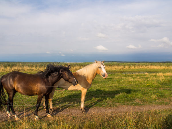horses Beautiful Nature Country EyeEm Best Shots Olympus Two Horses Animal Themes Beauty In Nature Cloud - Sky Country Landscape Day Domestic Animals Edithnerophotography Field Grass Horse Landscape Livestock Mammal Nature No People North Germany Outdoors Side View Sky Standing