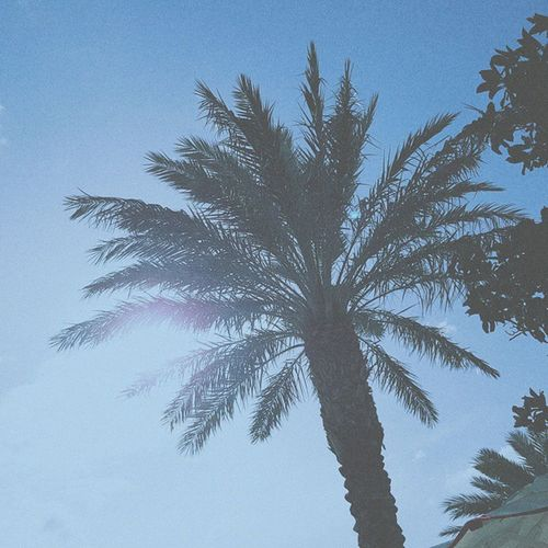 Vscocam Palm Tree Palmsprings USA Nature Photography Nature