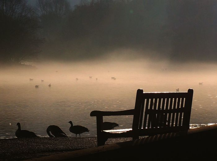 Lake View Misty Mist Geese Outdoors Beauty In Nature Bird Nottinghamshire The City Light