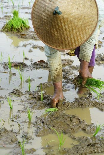 Rice farmer One Person Water Real People Growth Outdoors Culture And Tradition INDONESIA Jogjakarta One Woman Only Agriculture Working Day Low Section Adults Only Women Adult Human Body Part Nature People