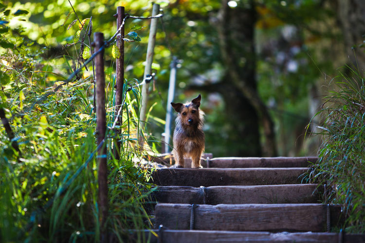 little dog is waiting on a hiking path Animal Themes Day Dog Dogfriendly Domestic Animals Domestic Dog Hike Hiking Nature No People One Animal Outdoors Pets Portrait Sitting Travel With Dogs Tree Walking Way