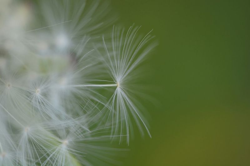 Flowers Nature EyeEm Best Shots - Flowers Macro Clique