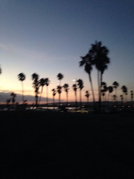 Blurry On Purpose Sunset Silhouette Sky No People Nature Tree Outdoors Scenics Palm Tree Beauty In Nature Defocused