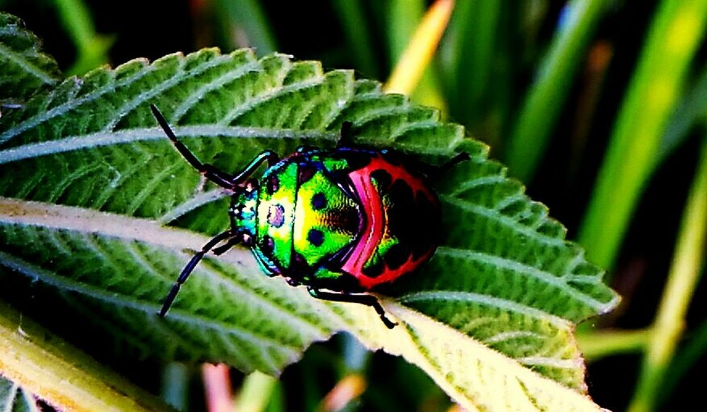 Mobile Photography India Beauty In Nature Insect