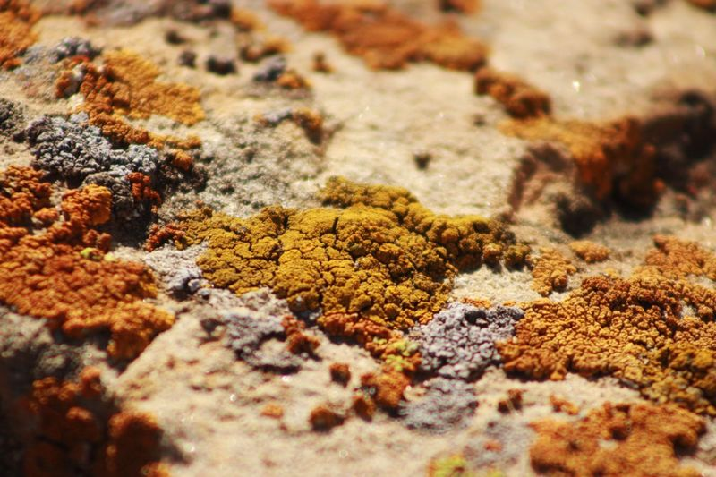 I call this...Moss Rock Nature Nature_collection EyeEm Nature Lover Macro Texture