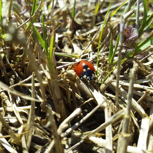 Ladybug Beauty In Nature Nature Flower Natureporn Nature Photography Mothernature Springtime Animal Themes