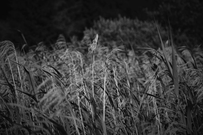 Black And White B&w Black And White Photography Black And White Collection  Camp From My Window Near Home Grass And Sky Check This Out Likeforlike #likemyphoto #qlikemyphotos #like4like #likemypic #likeback #ilikeback #10likes #50likes #100likes #20likes #likere Like This Faded Beauty Shadows And Backlighting Moving Shadows