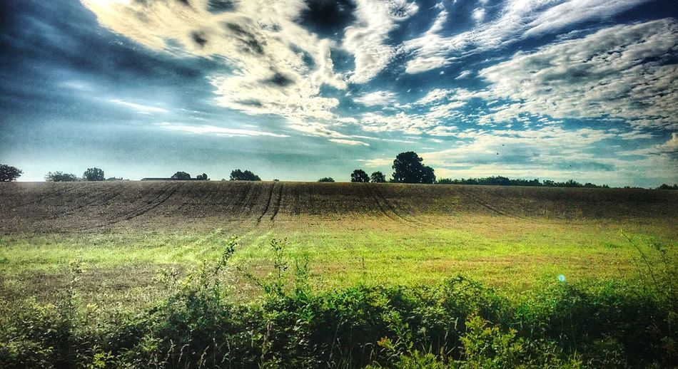 Sky Plant Field Landscape Environment Land Tranquil Scene Cloud - Sky Tranquility Beauty In Nature Growth Scenics - Nature Nature Rural Scene Tree Agriculture No People Crop  Green Color Day