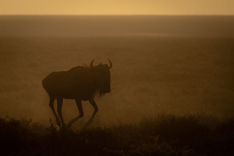 View of wildebeest on field against sky