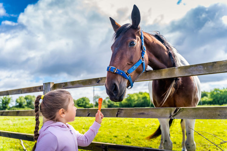Girl and horse in ranch