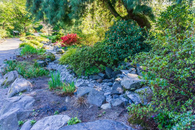 Plants and rocks in garden
