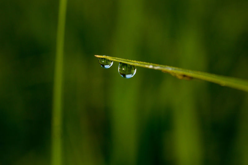 Beauty In Nature Blade Of Grass Close-up Day Dew Drop Focus On Foreground Fragility Freshness Green Color Growth Nature No People Outdoors Plant Purity Rain RainDrop Rainy Season Selective Focus Vulnerability  Water Wet