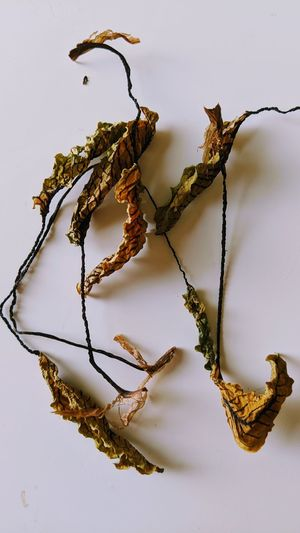 Close-up of dried plant against white background
