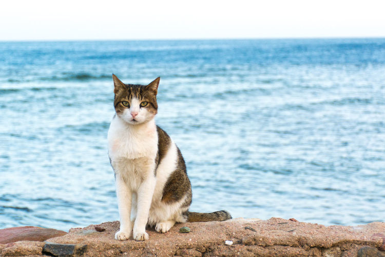 View of a cat sitting on the beach