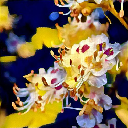 Beauty In Nature Bloom Blooming Blossom Botany Bunch Of Flowers Close-up Day Flower Flower Head Focus On Foreground Fragility Freshness Growth In Bloom Nature No People Petal Pink Color Prisma Prisma App Springtime Vibrant Color