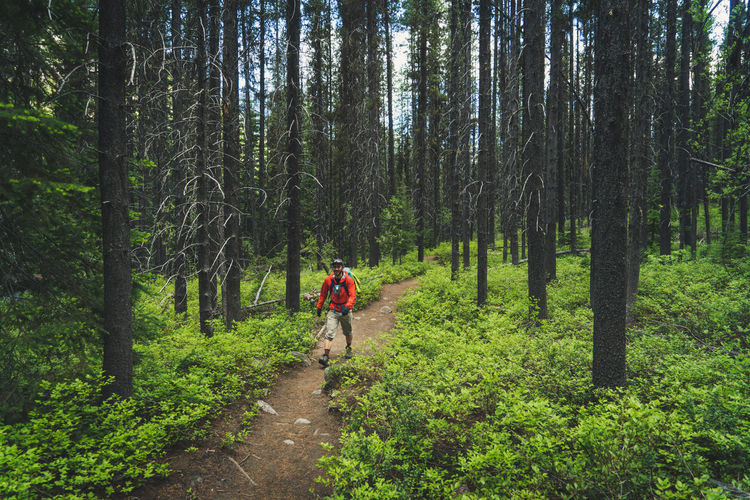 Man riding bicycle on road amidst trees in forest