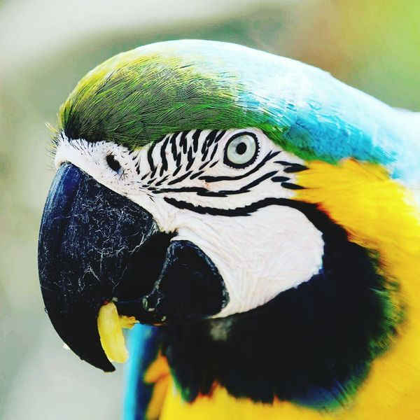 Bird Animal Wildlife One Animal Parrot Animals In The Wild Outdoors Gold And Blue Macaw Animal Themes Macaw Nature Close-up Day No People Nature Beauty In Nature