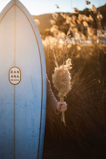 Detail Hand Woman Flower Nature Surfboard Surf Golden Hour EyeEm Selects No People Close-up Hanging Nature Decoration Indoors  Shape Christmas Ornament