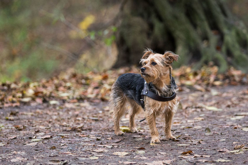 Animal Themes Day Dog Domestic Animals Focus On Foreground Full Length Mammal Nature No People One Animal Outdoors Pets