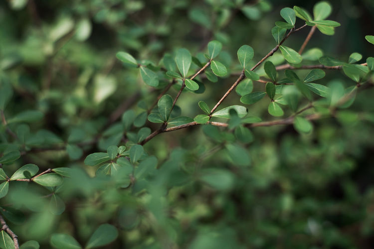 A Branch/ Branches Beauty In Nature Branches Freshness Greenery Leaf Leaves Nature Small Leaves TCPM