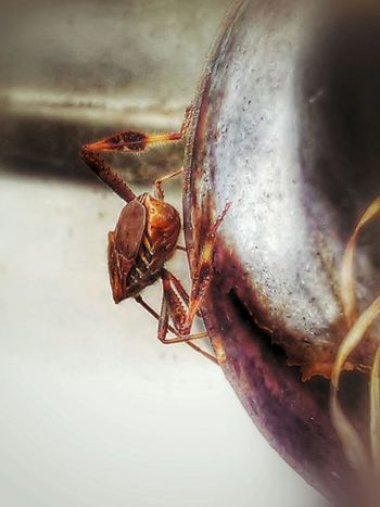 Explorer bug... Bugslife Bugs_are_us Wanze Insects Collection Insect Photography Eyem