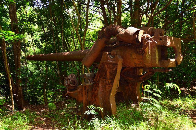 Anti-aircraft Artillery Green Jungle Ogasawara Island Old Battlefields Red Rust Rust Weapon