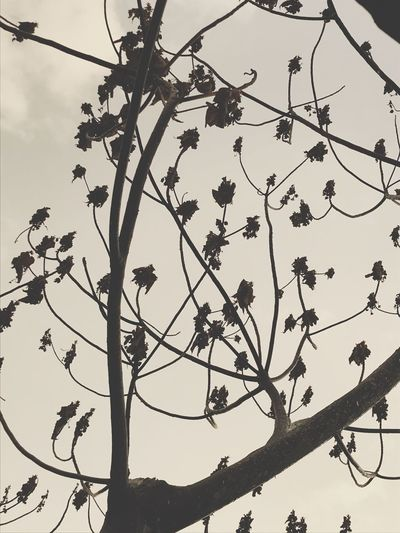 Tree Branch Low Angle View Sky Plant Silhouette Nature Beauty In Nature Tranquility Clear Sky Twig Leaf Plant Part Outdoors