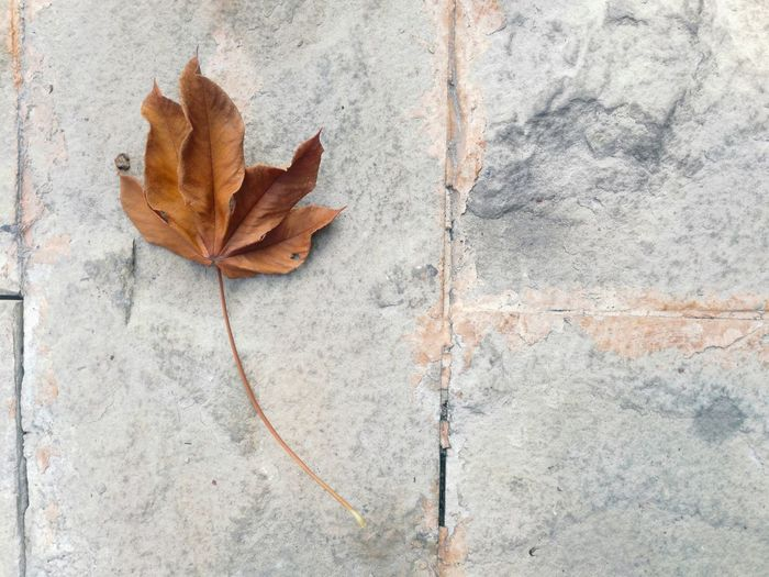 Dry leaves on