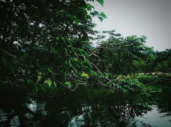 Water Reflection Nature Tree Lake Wet Sky Green Color Outdoors No People Beauty In Nature Backgrounds Day Pool Day