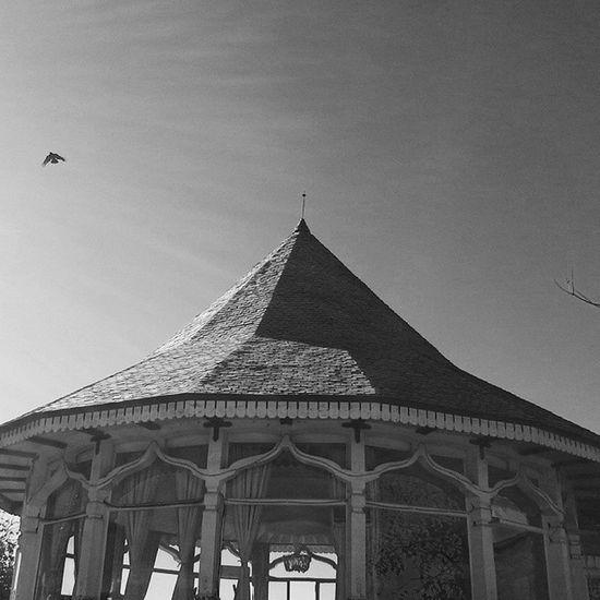 Shimla Blackandwhite Beautiful💕🌾