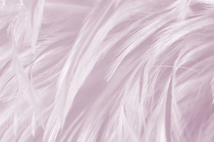 Backgrounds Full Frame Close-up Softness Selective Focus No People Textile Pattern Hair Textured  Feather  White Color Nature Indoors  Abstract Wool Fiber Silk Plant Lightweight Abstract Backgrounds Hairstyle
