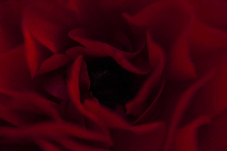 Shades of red Background Background Texture Backgrounds Beauty In Nature Close-up EyeEmNewHere Flower Flower Head Flowers Fragility Freshness Macro Macro Beauty Macro Photography Petal Red Red Red Color Red Colour Texture Textures And Surfaces