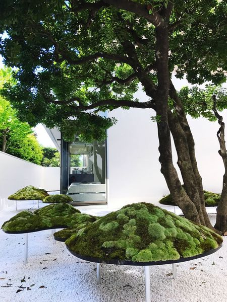 Green Color Tree Moss Garden Garden Architecture Designhotels Kyoto, Japan Anteroom Travel Photography